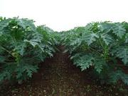 Organic input for agriculture is best use for our health