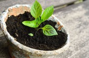 Choose super potassium humate for better results of plants growth