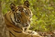 land sale for kanha wild life nantional park mukki mp